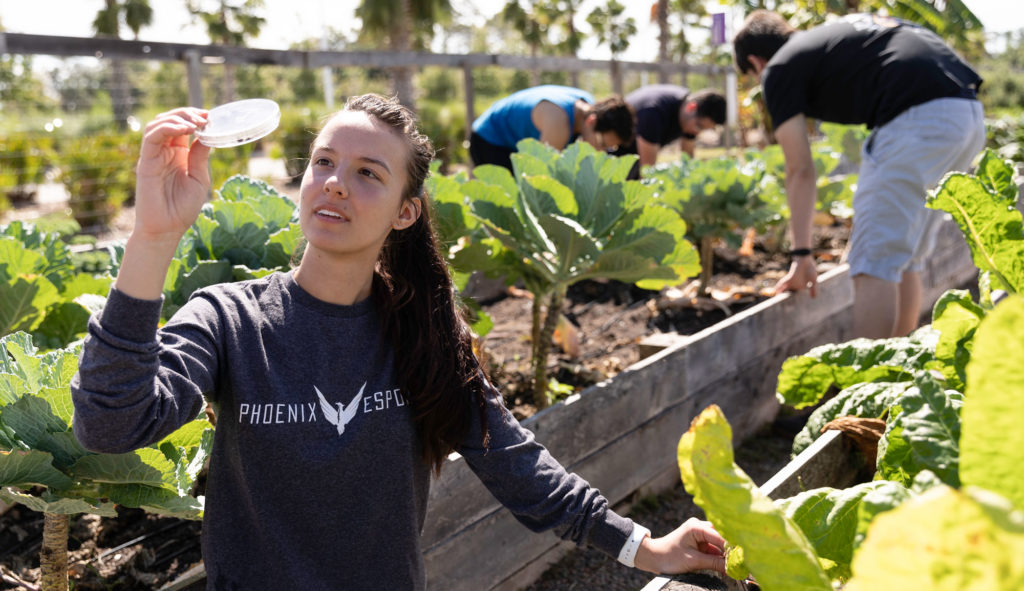 Florida Polytechnic University students work on the high-tech, sustainable garden developed on its campus in Lakeland, Florida. Environmental Engineering is one of three new degrees that Florida Polytechnic University offers students starting this academic year. Classes begin Aug. 21.